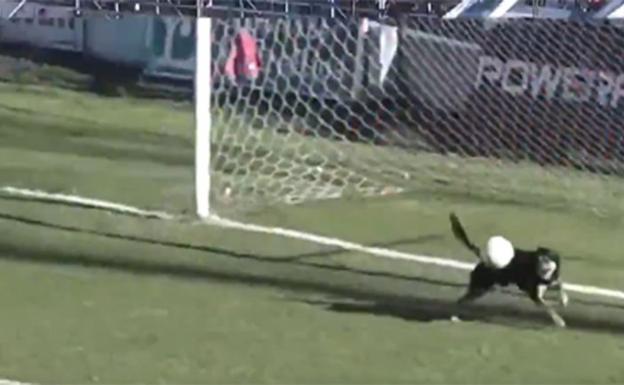 Insólito episodio en el Federal A: un perro atajó un gol