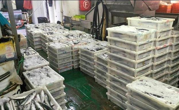 La partida de pescado intervenida./Subdelegación del Gobierno en Gipuzkoa