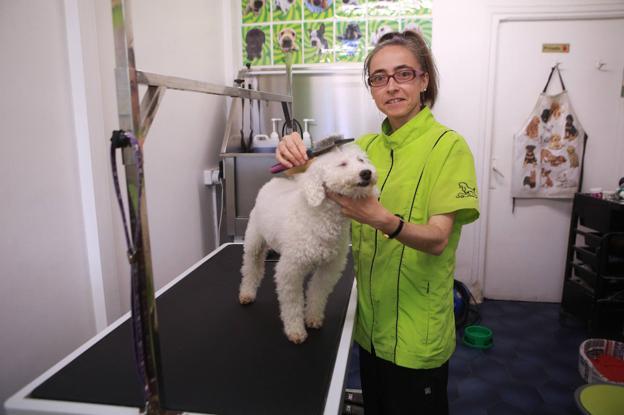 En la calle Sebastián Errazu está la peluquería canina 'Uno más' en la que Sandra cuida a cada perro como si fuera suyo./F. DE LA HERA